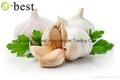 Chinese PURE WHITE Fresh Garlic 15