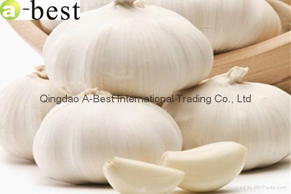 Chinese PURE WHITE Fresh Garlic 16