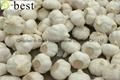 Chinese PURE WHITE Fresh Garlic 17