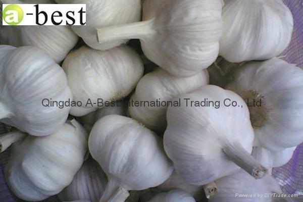Chinese PURE WHITE Fresh Garlic 19