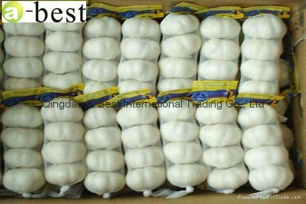 Chinese PURE WHITE Fresh Garlic 18