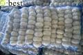 Chinese PURE WHITE Fresh Garlic 20
