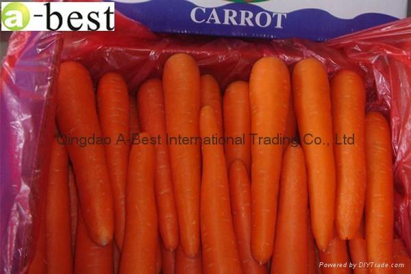 有机胡萝卜 2