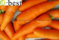 2017年產新保鮮胡蘿蔔