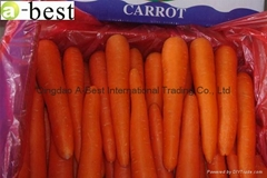 2017 NEW FRESH CARROT