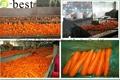 保鮮胡蘿蔔 13