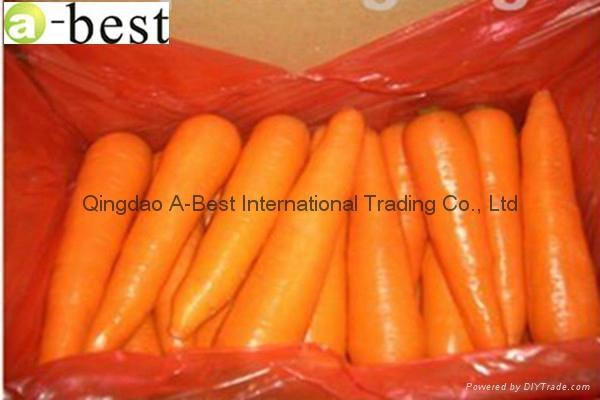 保鲜红萝卜 8