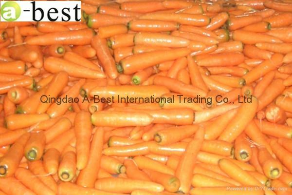 保鮮黃蘿蔔 2