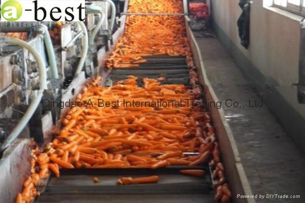 保鲜黄萝卜 1