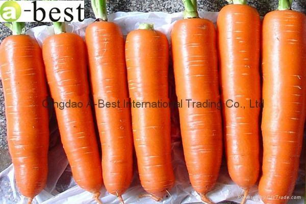 保鲜黄萝卜 4