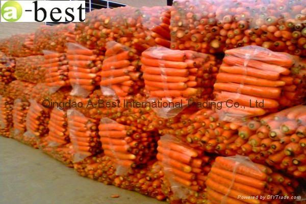 保鮮黃蘿蔔 9
