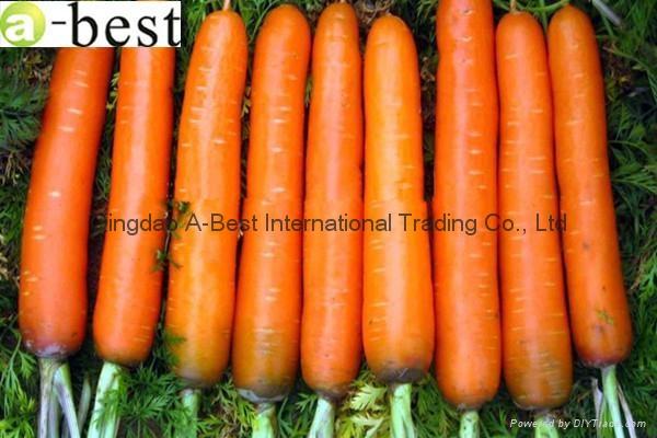 保鮮黃蘿蔔 10