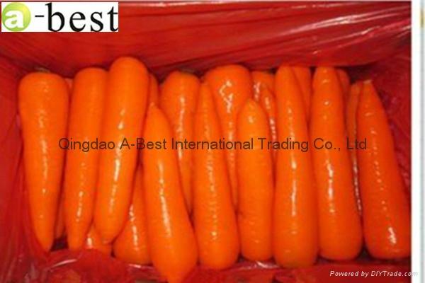 保鮮黃蘿蔔 11