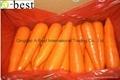 保鲜黄萝卜 12