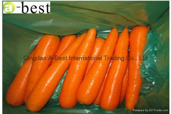 保鮮黃蘿蔔 20