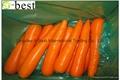 保鲜黄萝卜