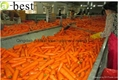 山東保鮮胡蘿蔔 4