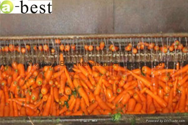 山东保鲜胡萝卜 2