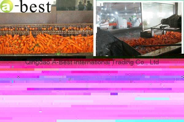 山東保鮮胡蘿蔔 5