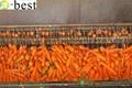 保鲜胡萝卜 10