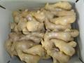 Chinese Big  Fresh Ginger