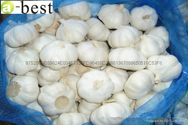 Pure white  fresh garlic 6