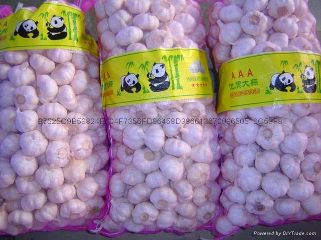 NEW  PURE WHITE Fresh Garlic 2