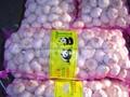 NEW  PURE WHITE Fresh Garlic 3