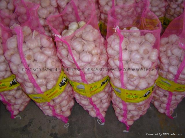 Chinese new crops Fresh Garlic 3