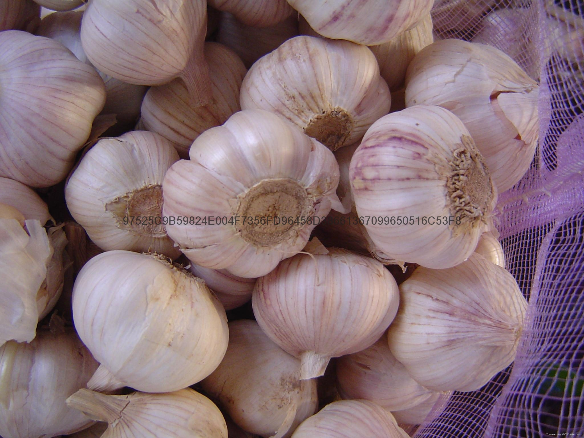 Chinese new crops Fresh Garlic 4