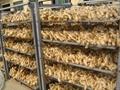 Jumbo Air dried ginger 18