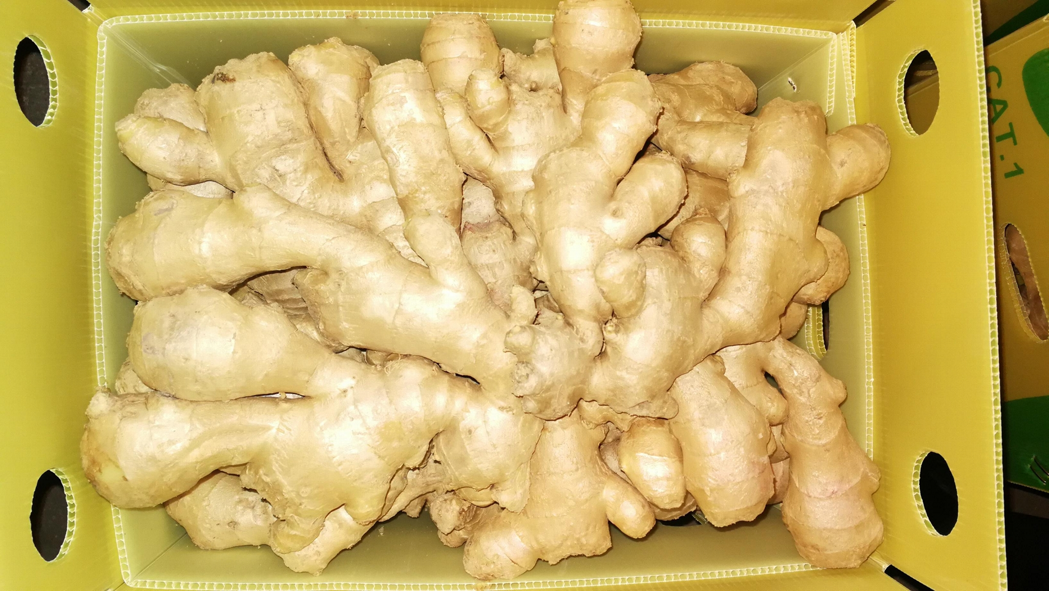 FRESH GINGER 5