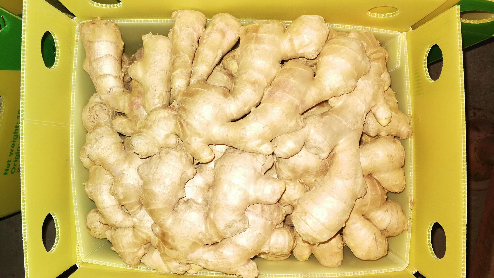 FRESH GINGER 6