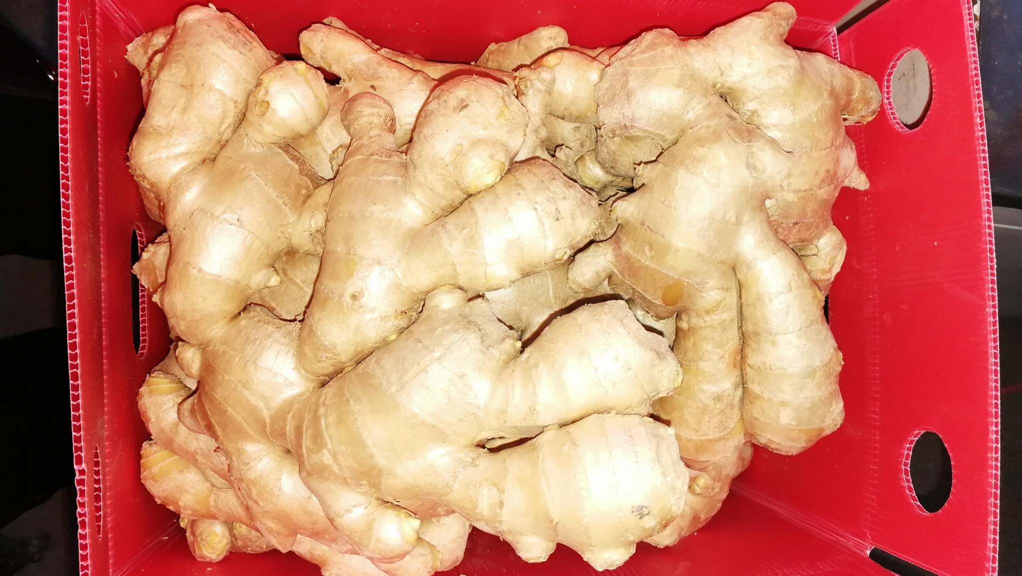 FRESH GINGER 8