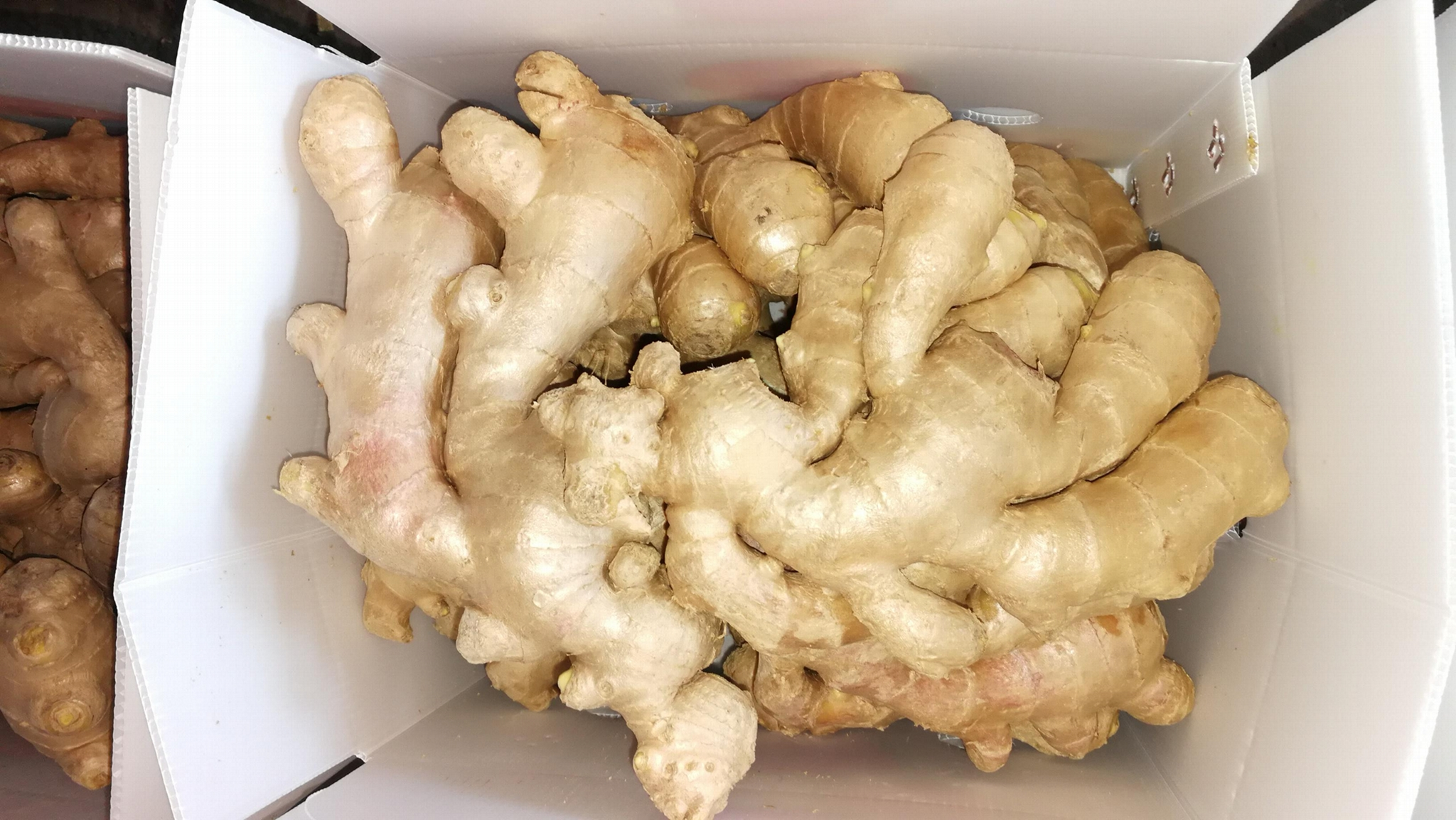 FRESH GINGER 10