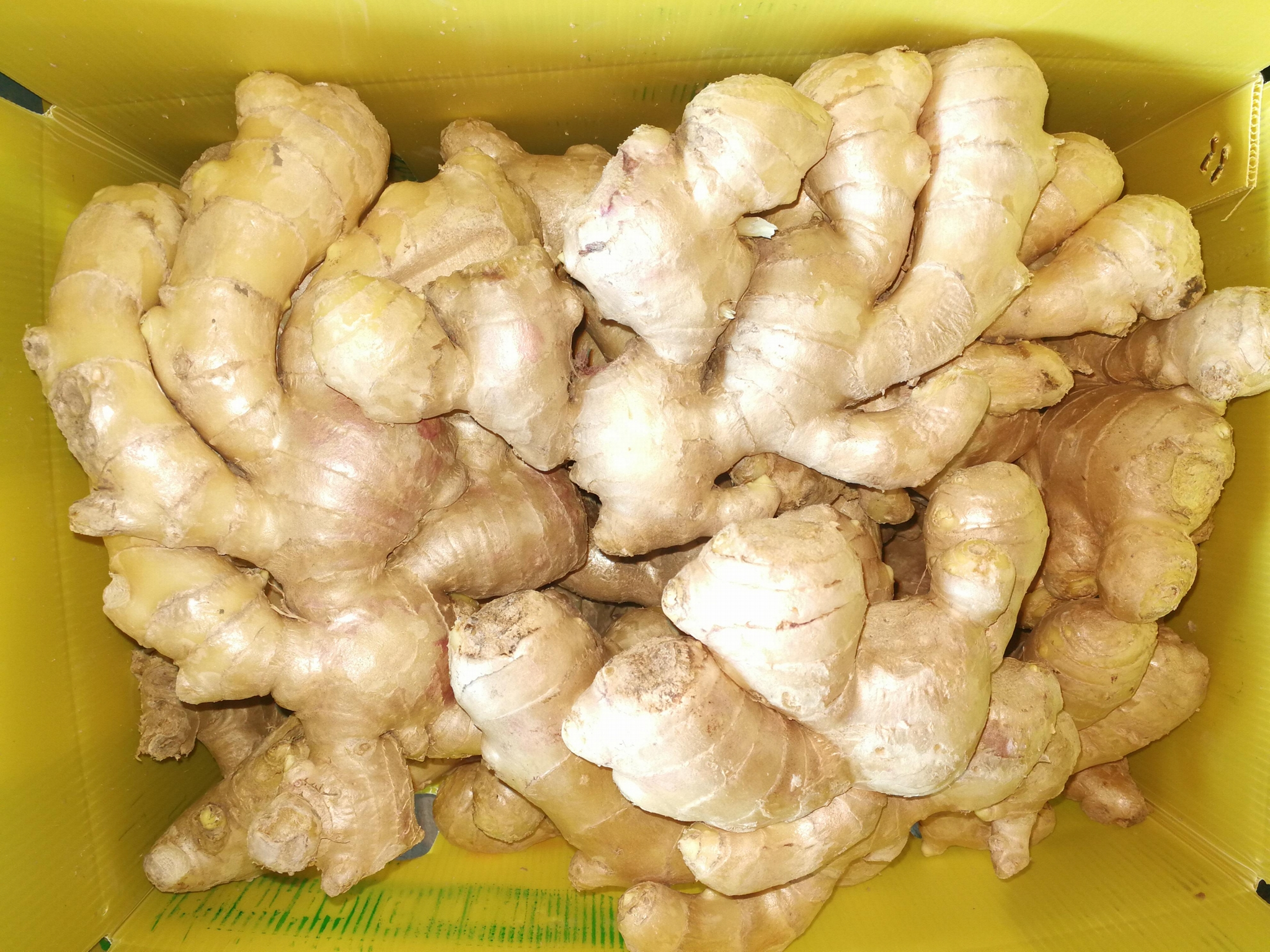 FRESH GINGER 12