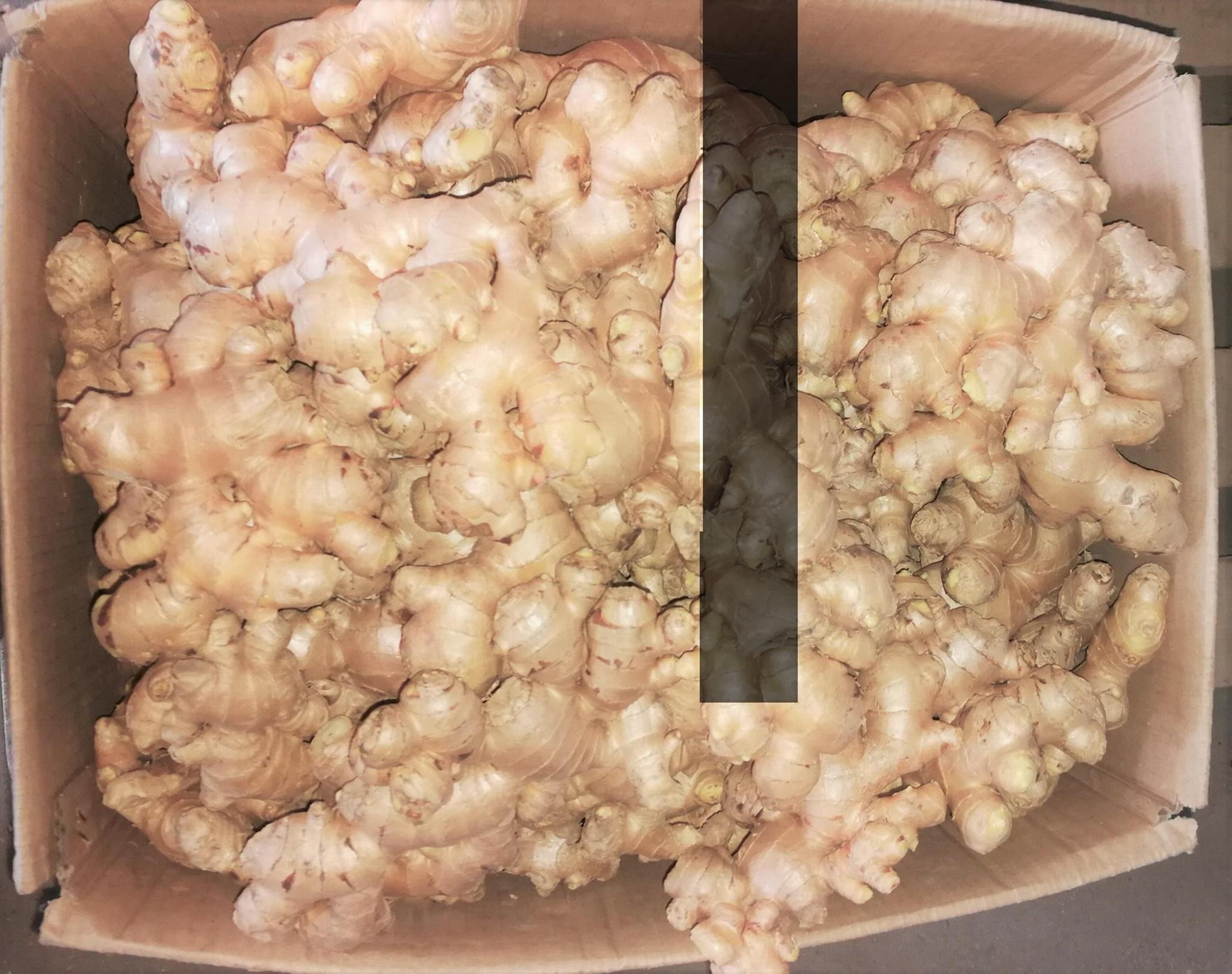 Organic ginger 18