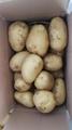 New Fresh holland potato 7
