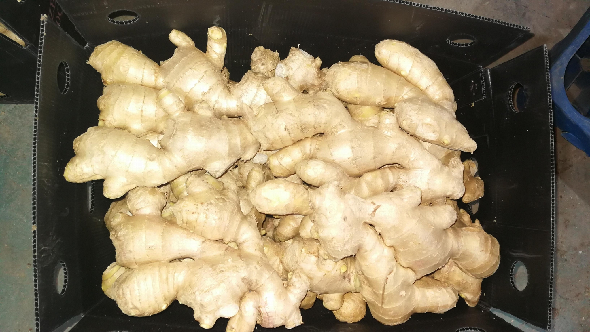2021 Air dried ginger 9