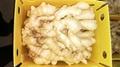 2021 Air-dried Fresh ginger