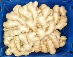 2021 Chinese Fresh air dry Ginger