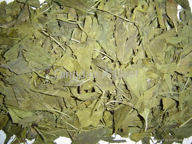 Ginkgo Biloba Leaves P.E. 1