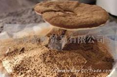 Ganoderma lucidum spore powder (broken)