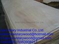 Rengas Veneer for plywood