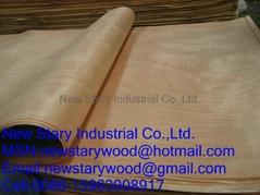 Rotary cut okoume veneer for plywood