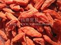 Chinese Wolfberry Fruit, Goji berry, Lycium Chinese 1