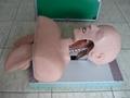 EM-010A Tracheostomy simulator