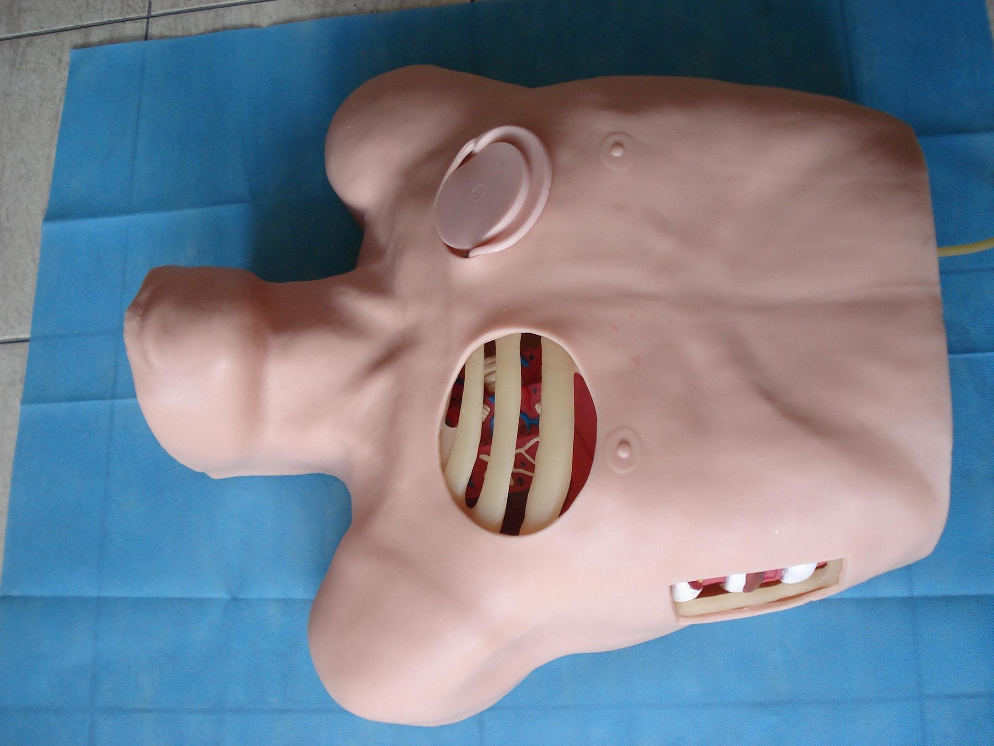 EM-017  胸腔引流模擬人 2