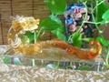 琉璃 水晶 風水擺件 提供