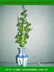 Evergreen Lucky Bamboo Art Garden
